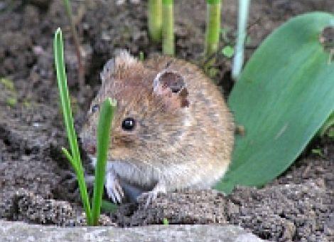 Mäuse und Schnecken bekämpfen