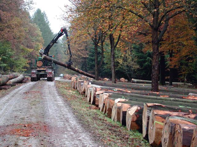 Gemeinsame Nur mit Kaufvertrag Stammholz einschlagen | Jagd, Forst und Natur @EH_04