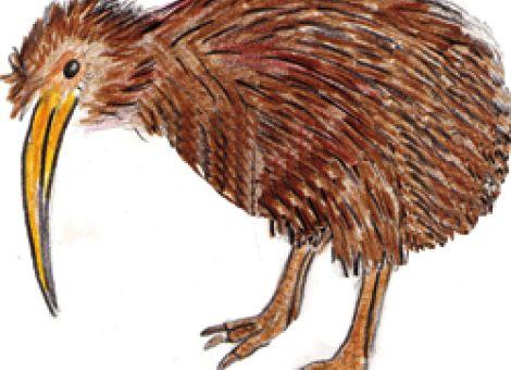 Der Kiwi