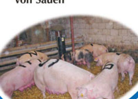 Merkblatt Gruppenbildung von Sauen