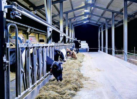 Trends in Bau und Ausrüstung von Milchviehställen