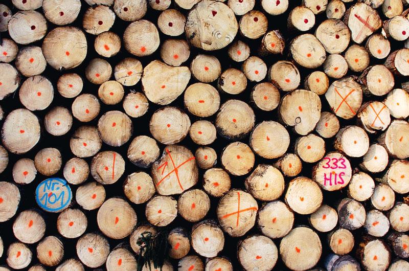 Landesbetrieb Hessen Forst Geht Neue Wege Im Holzverkauf Aus Der