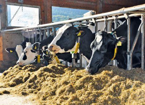 Einsparpotenziale im Milchviehbetrieb nutzen
