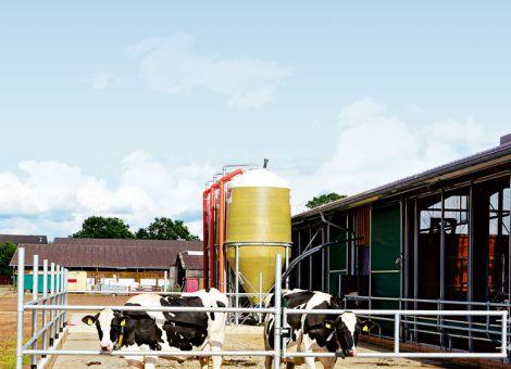 Kühe lieben Laufhöfe vor allem bei kühleren Temperaturen
