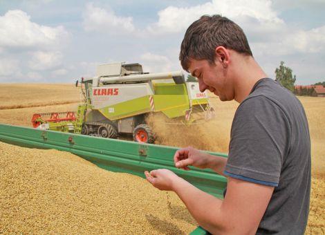 Getreide: Trockenheit sorgte für niedrige Rohproteingehalte