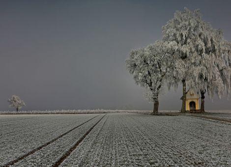Die Schönheit der Landwirtschaft im Fokus