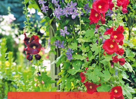 Bauerngärten. Anlegen und pflegen