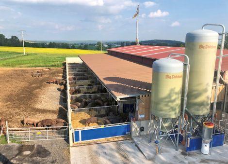 Ganzjährig Weidegang für Schweine und Rinder