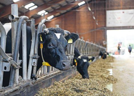 Mehr Tierhaltung auf den Öko-Feldtagen