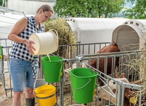 Freie Wasseraufnahme für Kälber ab dem ersten Tag