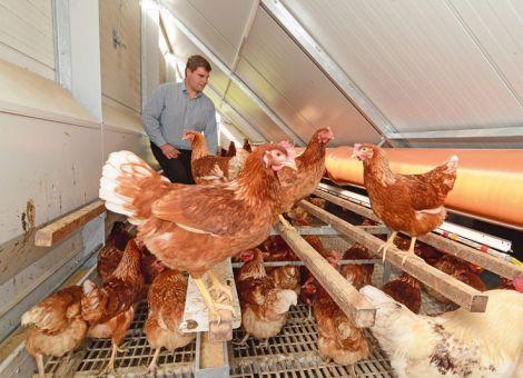 Bundesrat befasst sich mit mobilen Haltungseinrichtungen für Hennen