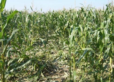 Wildschaden – was kann der Landwirt und Winzer tun?