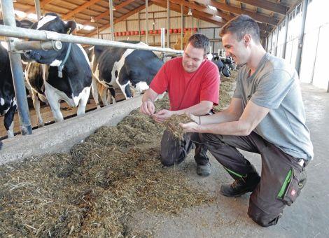 Phosphorausscheidungen von Milchkühen über Fütterung reduzieren