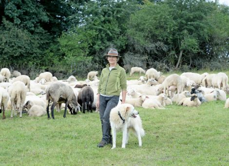 Herdenschutz: Förderung der laufenden Kosten für Wanderschäfer