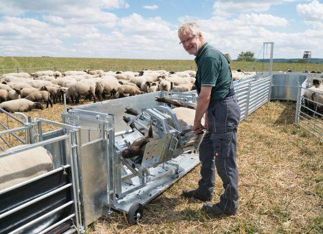 Sicherheit in der Schafhaltung