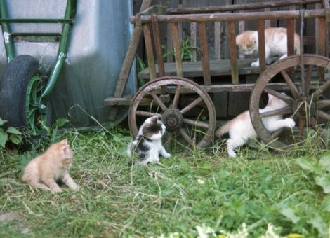 Katzen mit unbeaufsichtigtem Freilauf sollte man kastrieren lassen