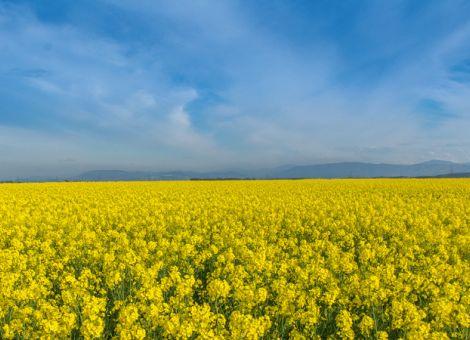 Corona: Achterbahnfahrt an den Agrarmärkten