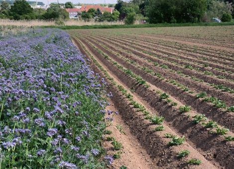 Bauern fördern Nahrung für Insekten und die Artenvielfalt