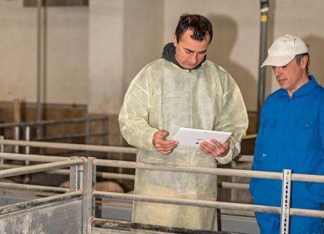 Schweinehalter können Status zur ASP-Freiheit anstreben