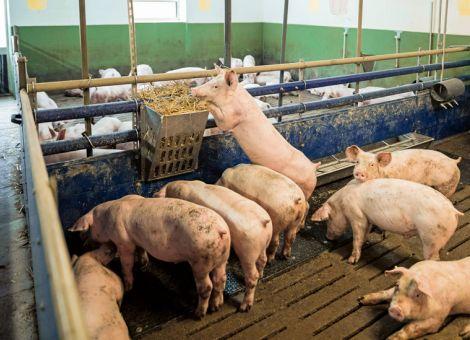 Initiative Tierwohl startet neue Programmphase
