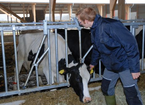 Herdenmanager für 650 Kühe