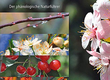 Pflanzen im Rhythmus der Jahreszeiten beobachten: Der phänologische Naturführer