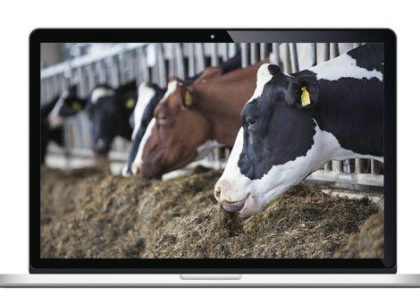 Fach-Video-Kanäle für Rinder-, Schweine- und Geflügelhalter