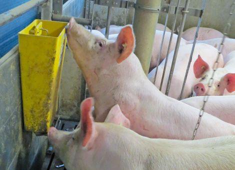 Schweinehaltung war Thema der Landwirtschaftlichen Woche
