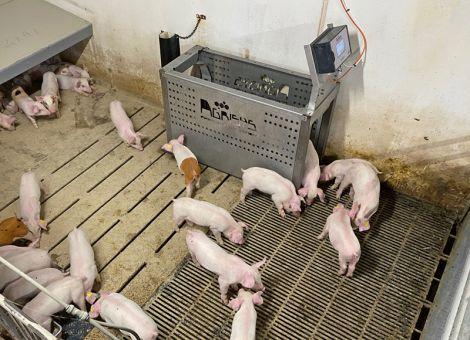 Neuheiten Schweinehaltung bei der Eurotier digital