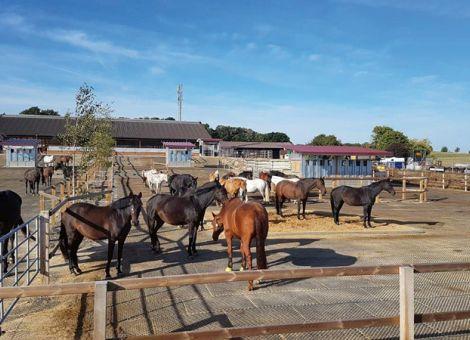 Betrieb Allendörfer stellte vom Milchvieh- auf Pferdehaltung um