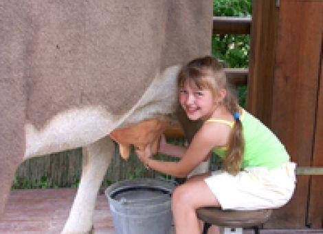 Kinder in den Kuhstall
