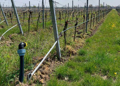Bewässerung – eine Frage der Einstellung