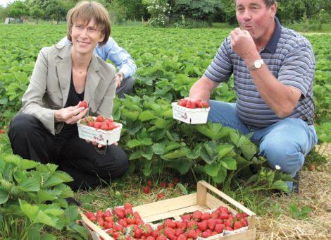 Hessische Erdbeersaison in Kriftel eröffnet