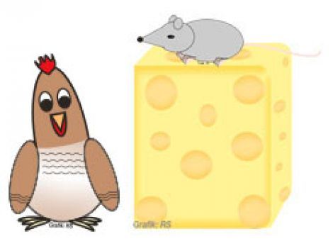 Wie kommt das Loch in den Käse?