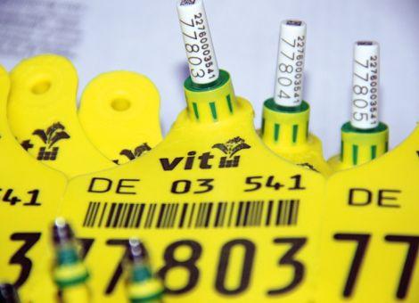 Neue Regelungen bei der BVD-Bekämpfung