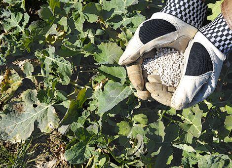 Erhöhung der N-Effizienz durch Teilflächendüngung im Rapsanbau