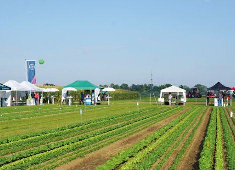 Wie steht es um den Pflanzenschutz im Gemüsebau?