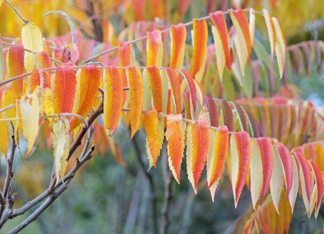 Gehölze mit Herbstlaub voller Leuchtkraft