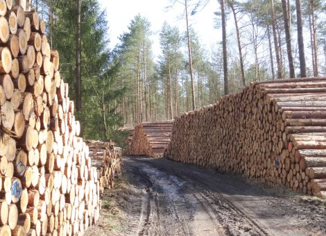 Waldbesitzer auf der Suche nach neuem Einkommen