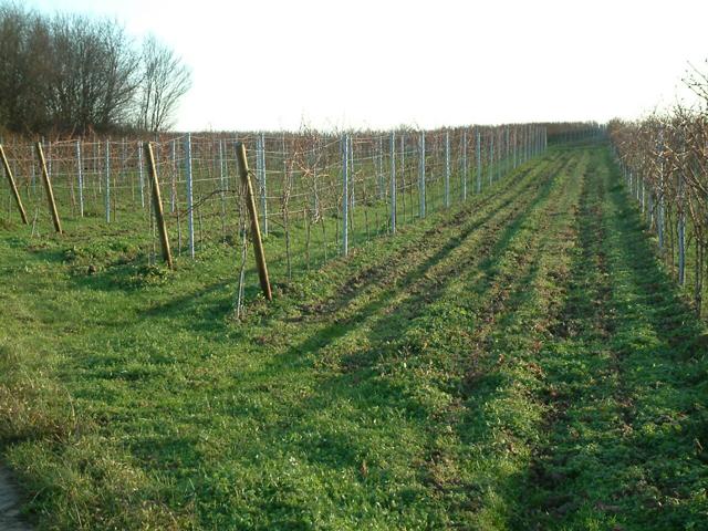 Extensivierung – Möglichkeiten und Grenzen | Weinbau
