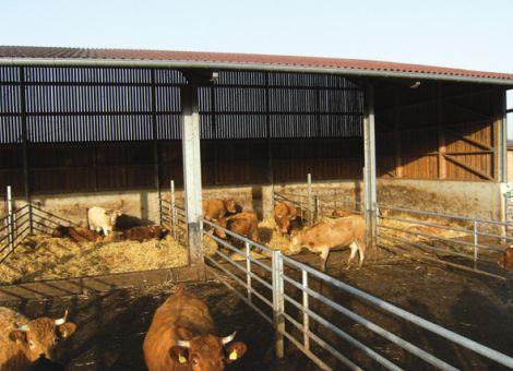 Außenhaltung der Mutterkühe als Alternative?