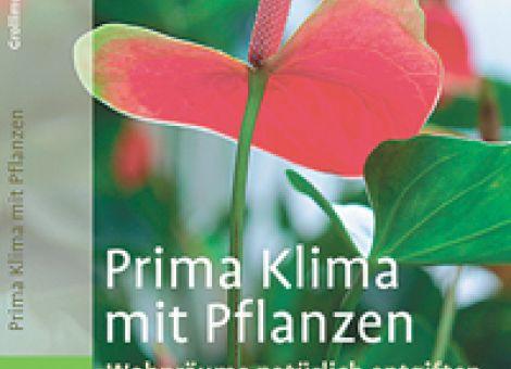 Prima Klima mit Zimmerpflanzen