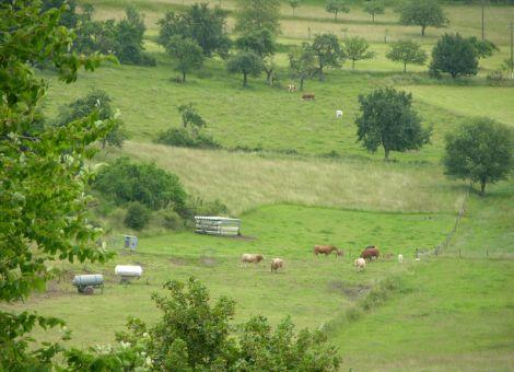 Landschaft mt Mutterkühen in Brandoberndorf
