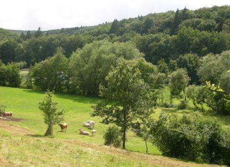 Kröffelbach Weide