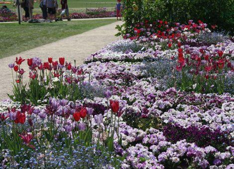 Blumenbeet-lila